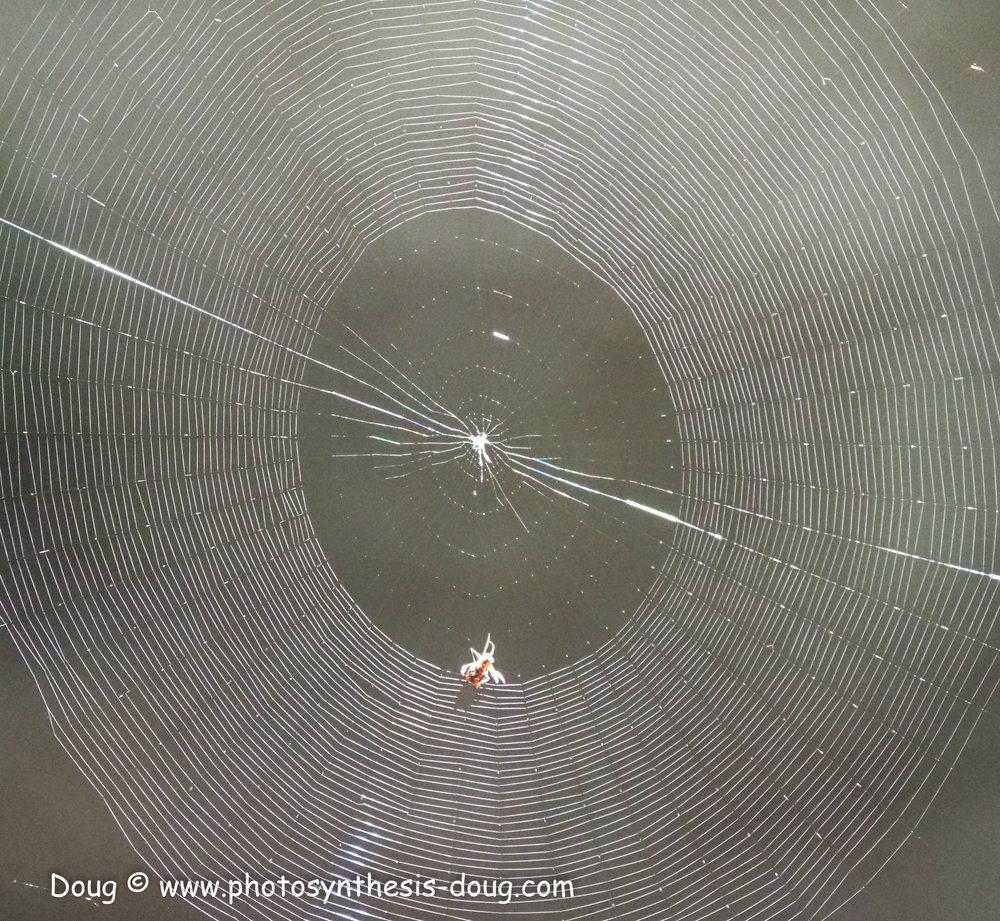 spider web-041138.JPG