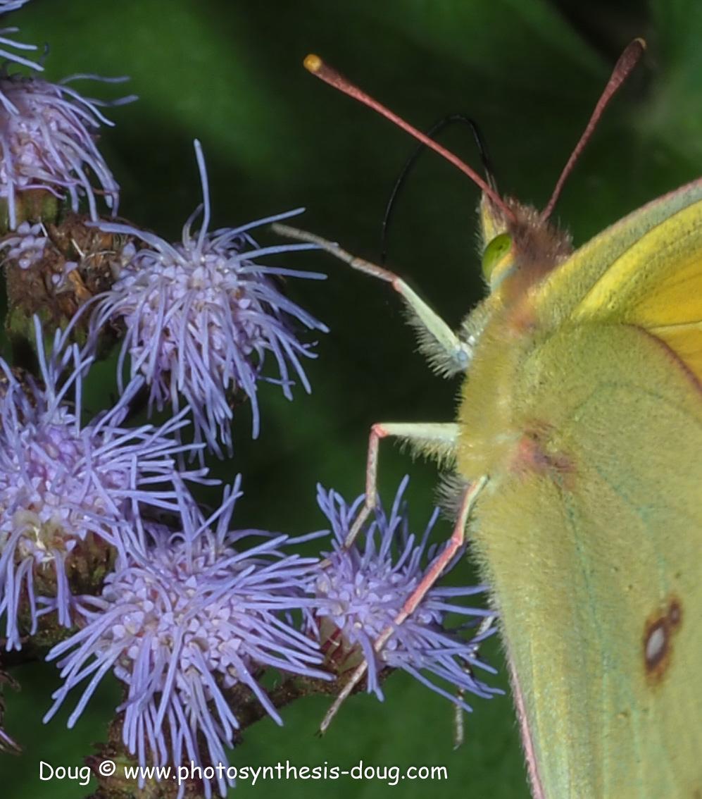 1 butterfly-9300659.JPG