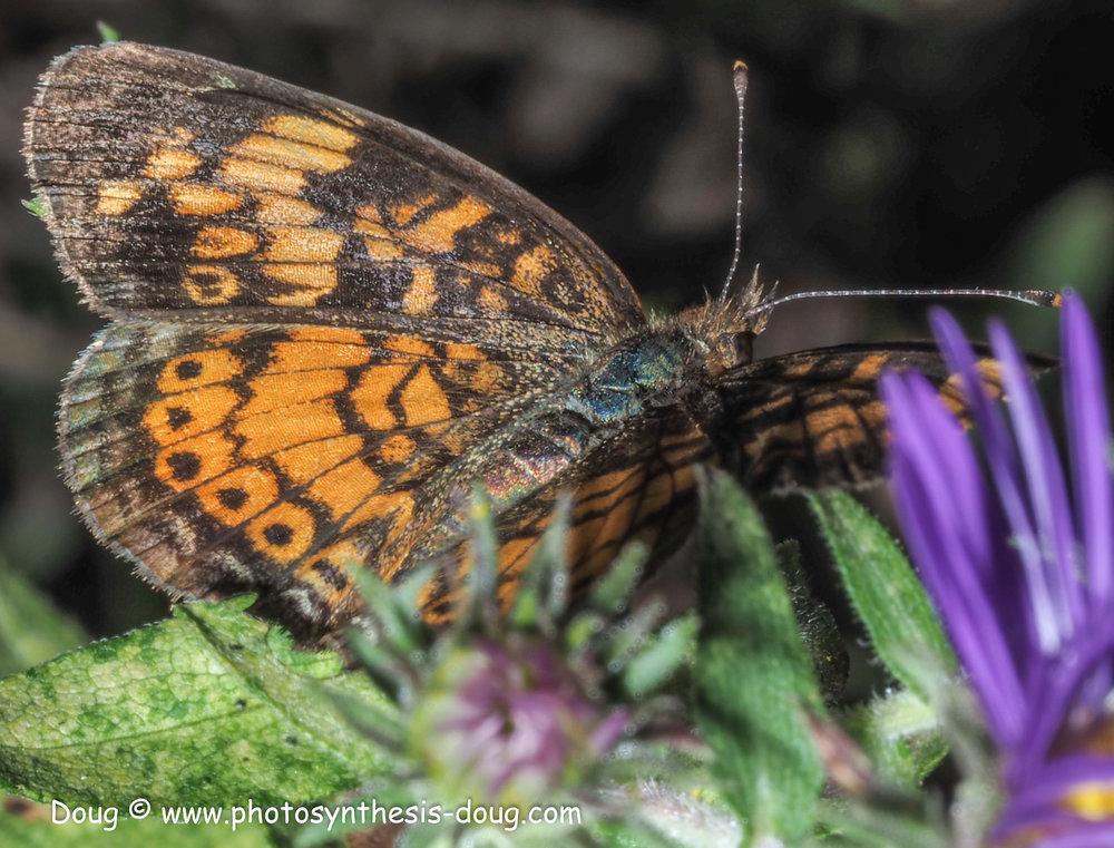 1 butterfly-9300709.JPG