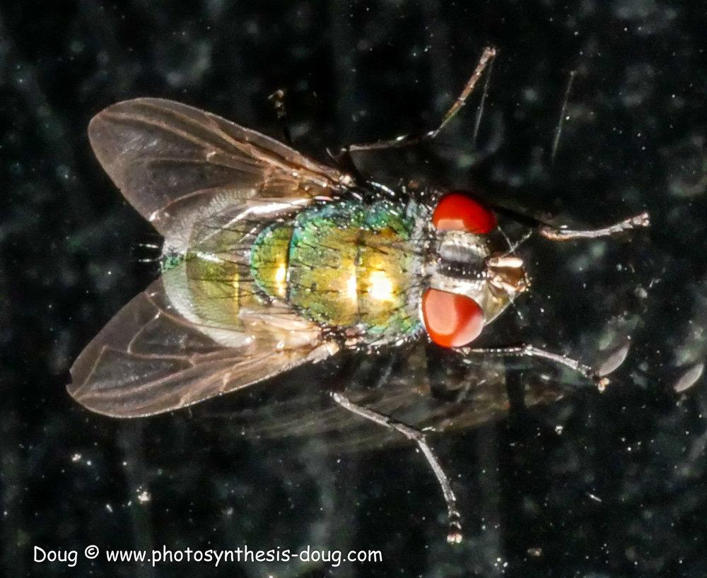 tiny fly-1080306.JPG