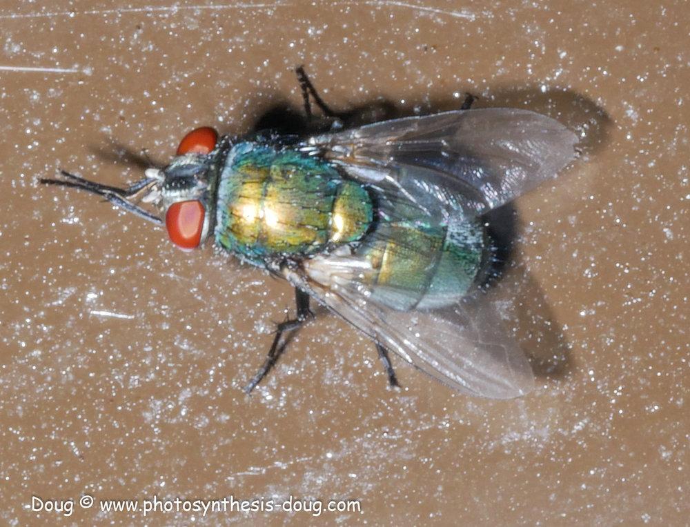 tiny fly-1080311.JPG