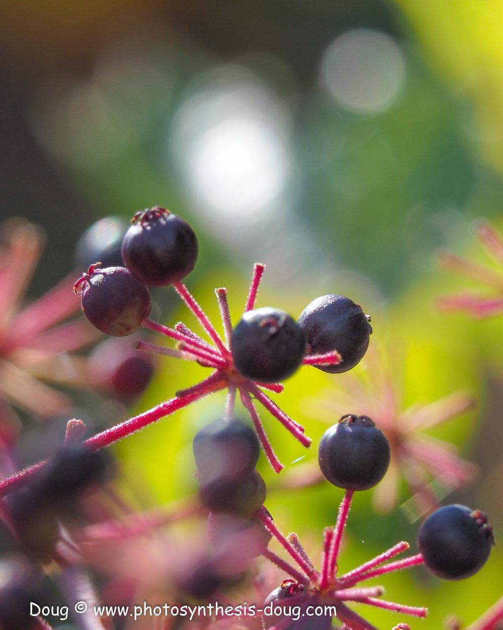 berries-041222.JPG