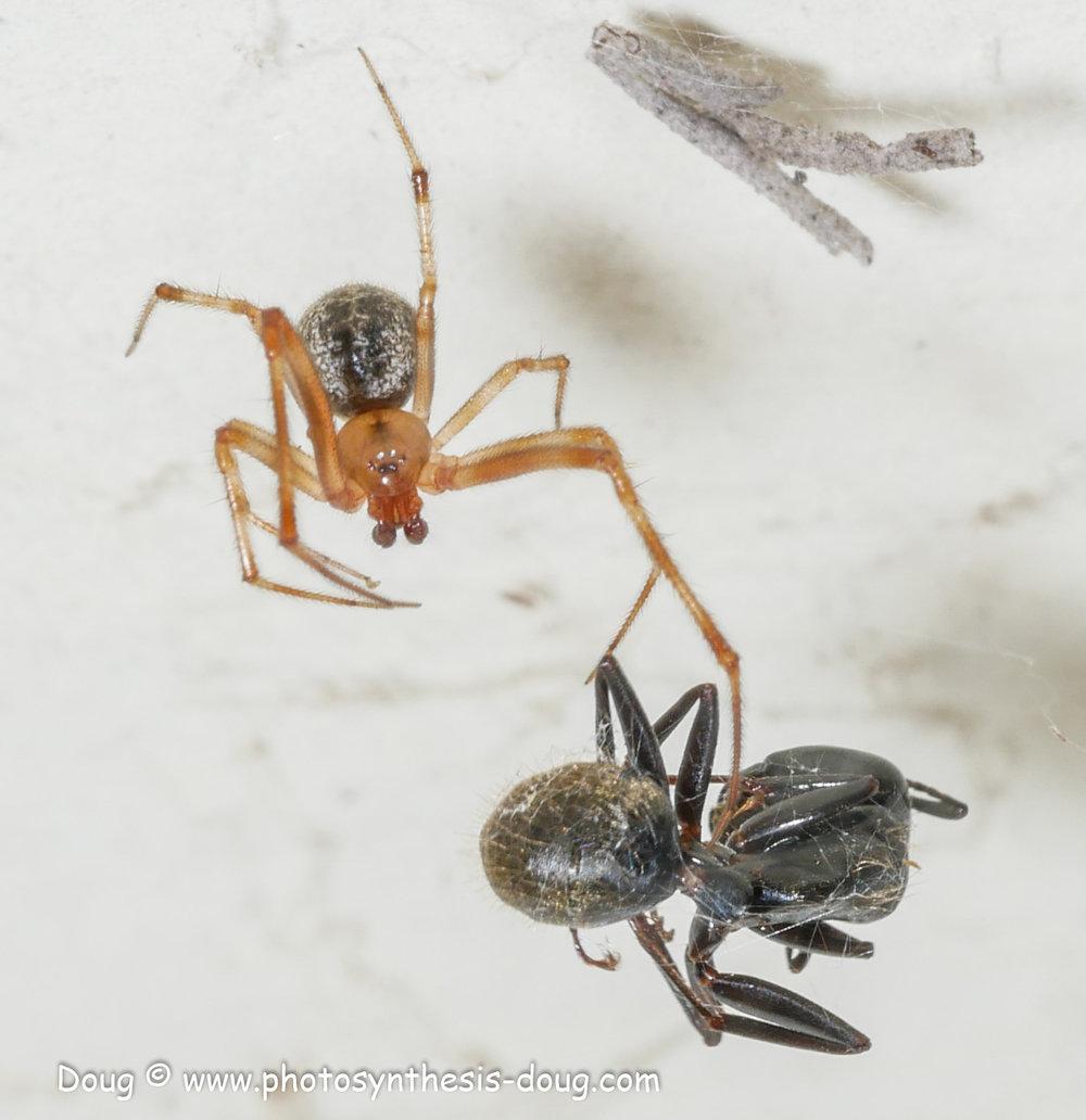 spider-1130207.JPG