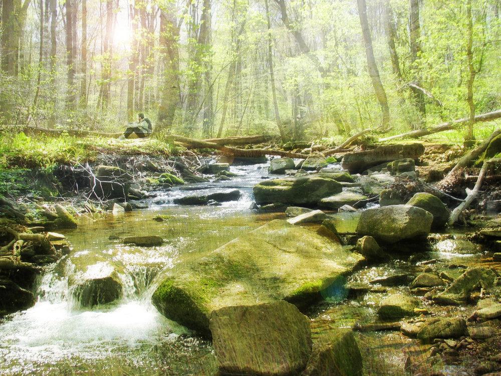 Simba Park Spring012_me.jpg