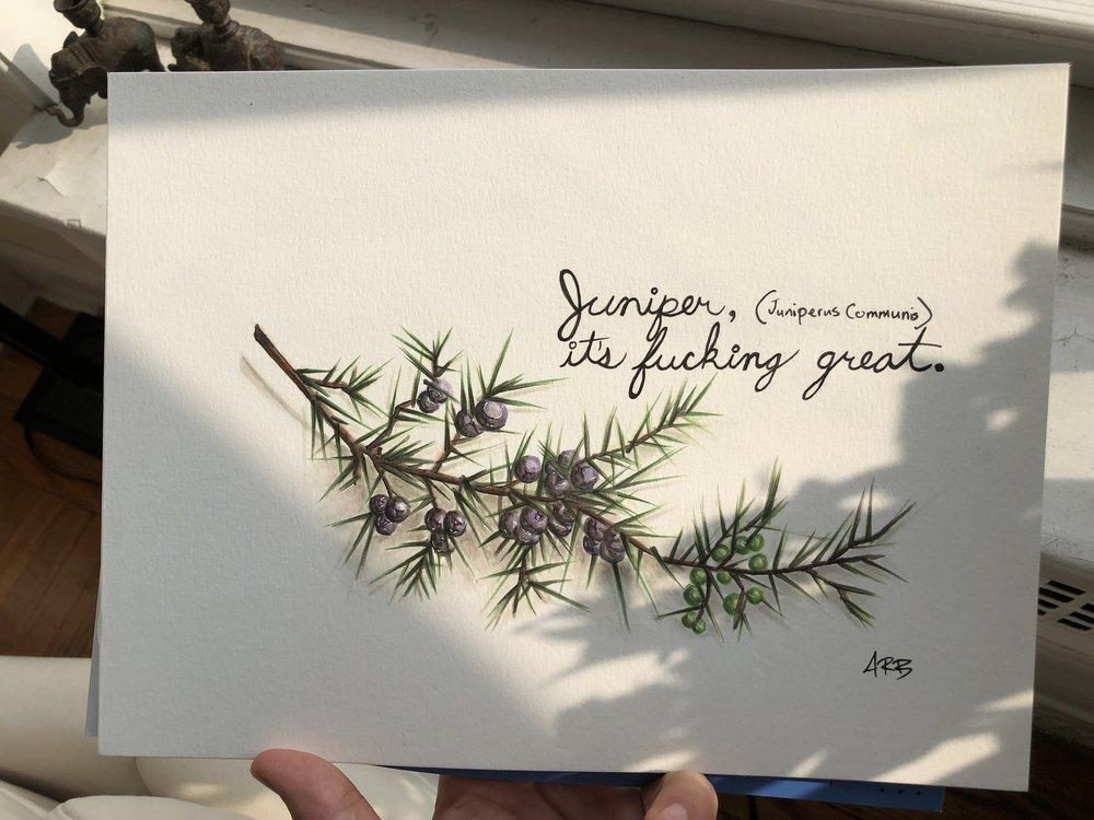 Juniper juniperus communis gin beriies Andrew Bohrer.jpeg