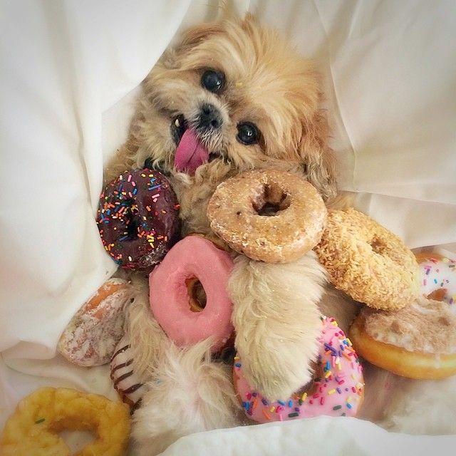 happy-dog-donuts.jpg