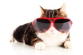 spring break cat.jpeg