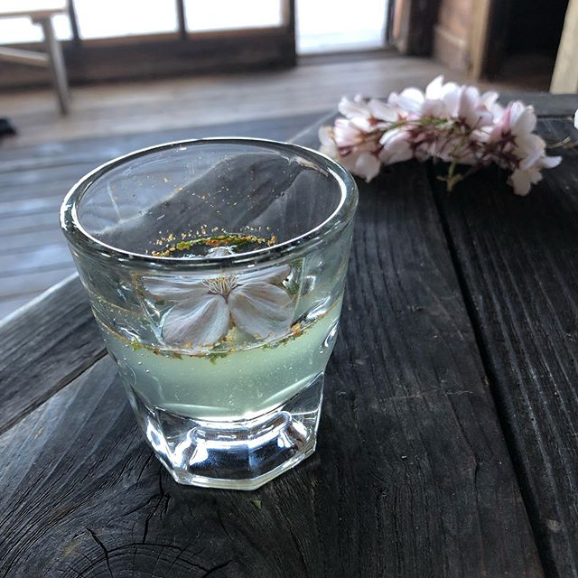 "Tonight's cocktail for the closing of the 'Captured Space' show with @terasu. | 1 oz El Castor ""claro"". 1 teaspoon elderflower, shiso leaf, togarashi chili, and yuzu syrup. 3/4 oz Fever Tree tonic. 1 cherry blossom for garnish. 🌸"