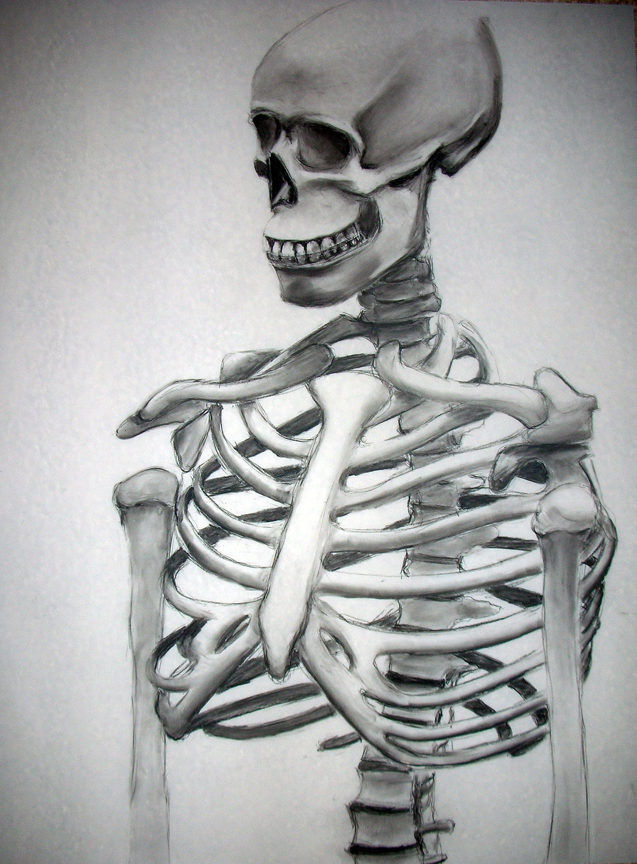 Dug this up from a while ago, drew this in a drawing class from one of those lab skeletons. Drawn on vellum, a semi-transparent plastic like paper, using charcoal. Really fun to draw, and the vellum and charcoal is an amazing combination to work with.