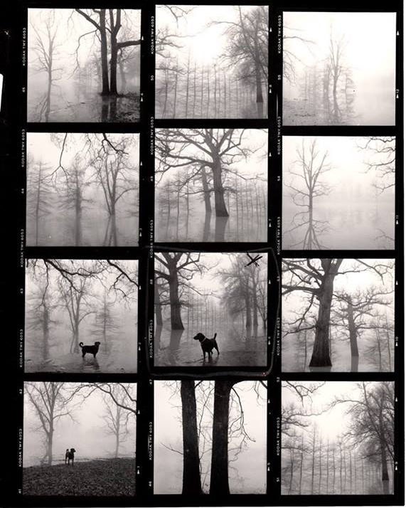 "Contact sheets for ""Dog in the Fog."" Photos by Maudie Clay."