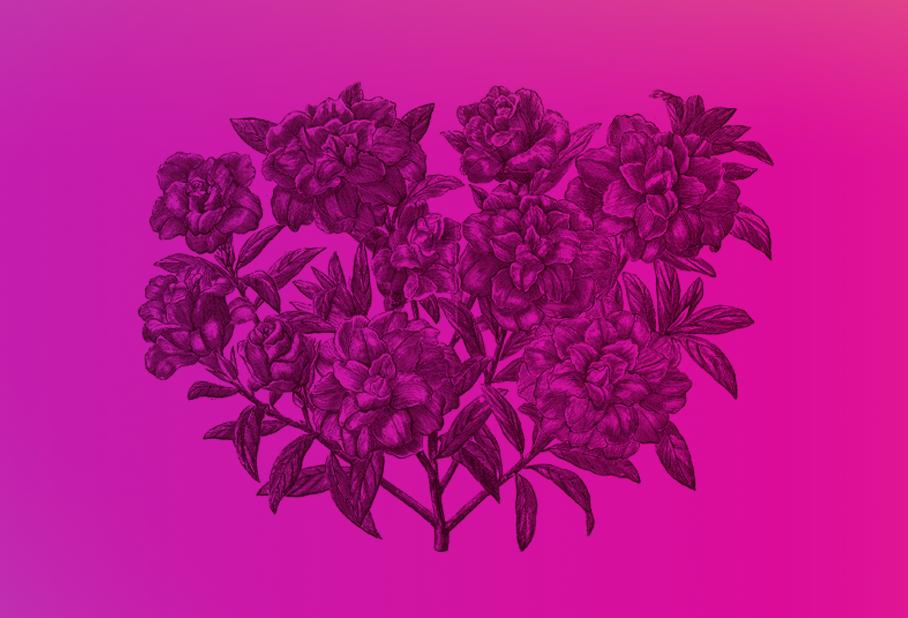 azelea-header-gradient.png