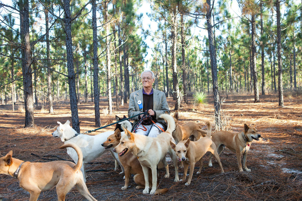 Fence For Dogs >> Carolina Dogs — THE BITTER SOUTHERNER