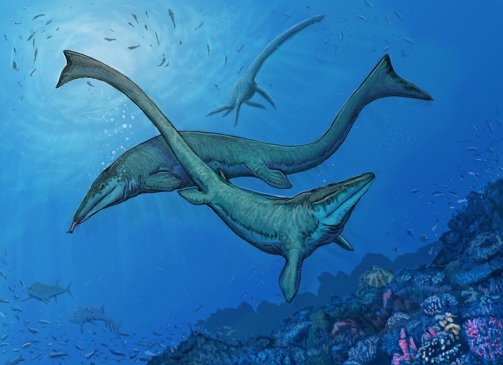 A male and female  Tylosaurus  perform a mating dance above the mullusk reef. In the gloom to the left, a pair of  Xiphactinus  hunt fish; above to the right, an  Elasmosaurus  flies through the water on the same mission.