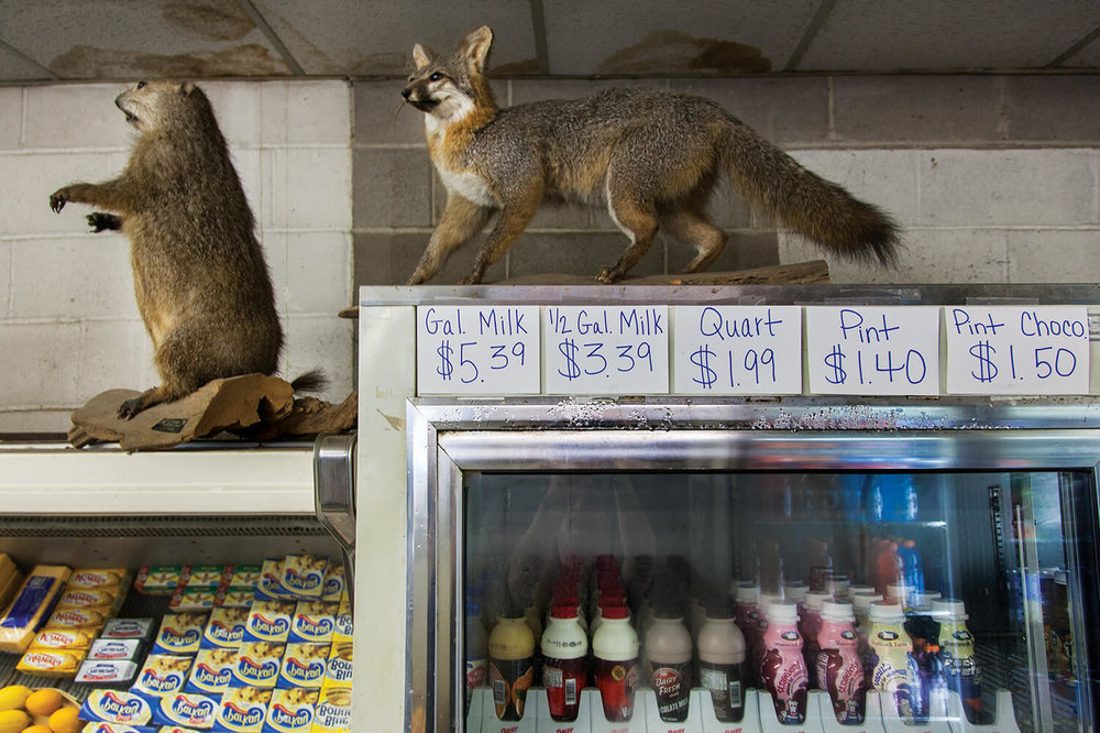 60.taxidermy.groceries.jpg