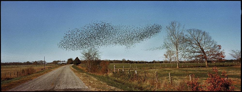 90.birds.jpg