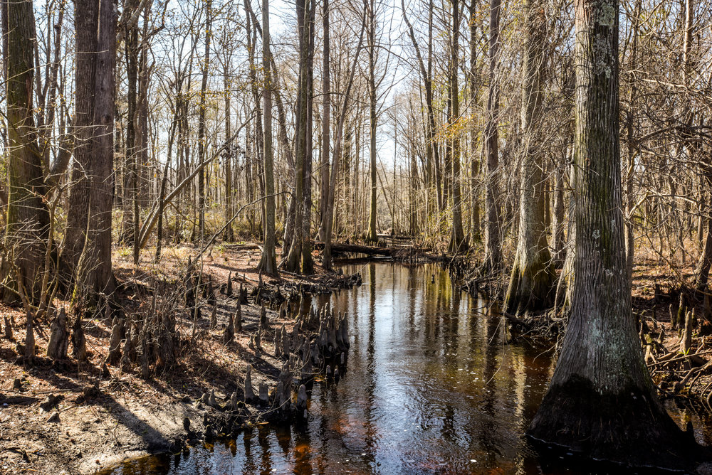 """Without the river giving us all the different food sources [and] cultural practices, we wouldn't be here as Native Americans, because the entire river is basically a constitution of our Native life,"" Jorden Revels, a Native activist and sophomore studying at UNC Pembroke, says about the Lumber River."