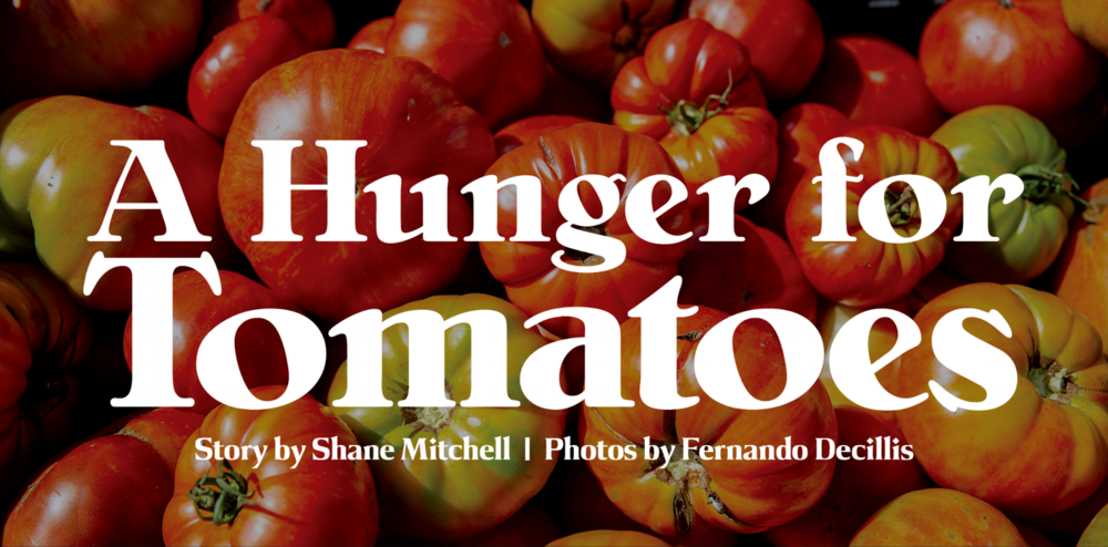 tomato-header.png