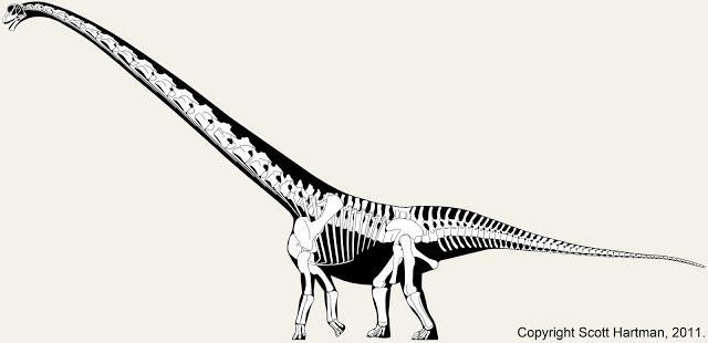 mamenchisaurus.jpg