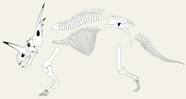 styracosaurus+-+exploded.jpg