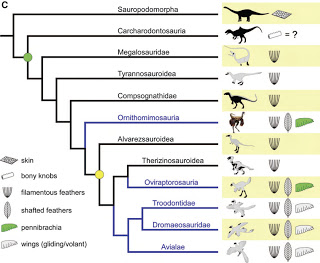 feathered+cladogram.jpg