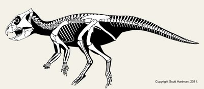 Archaeoceratops_dissected.jpg