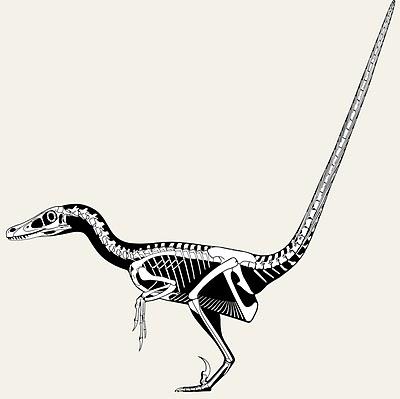 Velociraptor+tail+flex.jpg