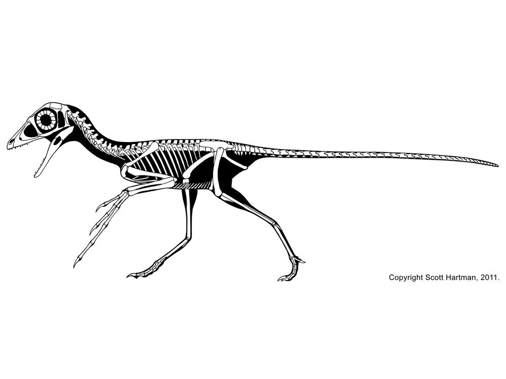 Scansoriopteryx heilmanni