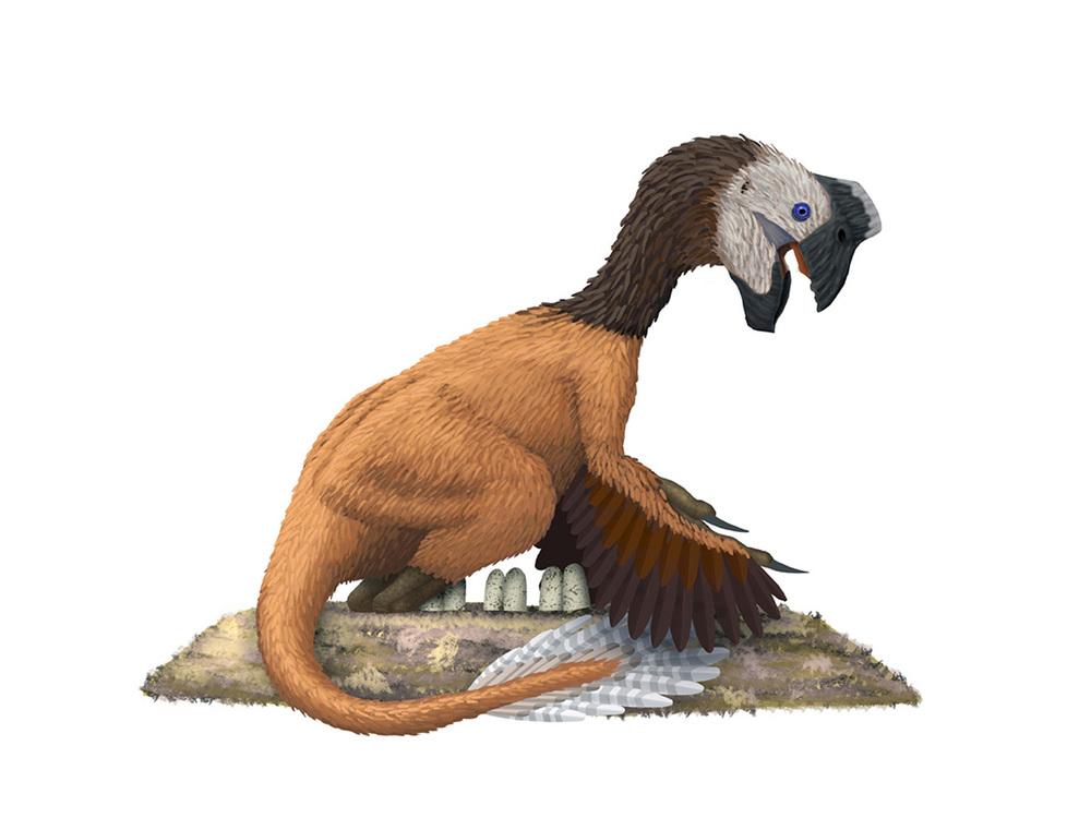 Oviraptor.jpg