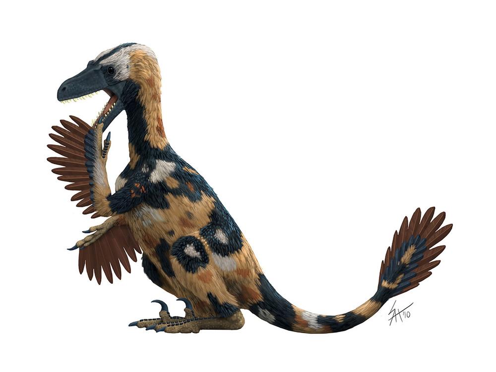 Velociraptor ABCDinos.jpg