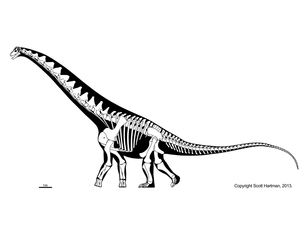 Alamosaurus.jpg