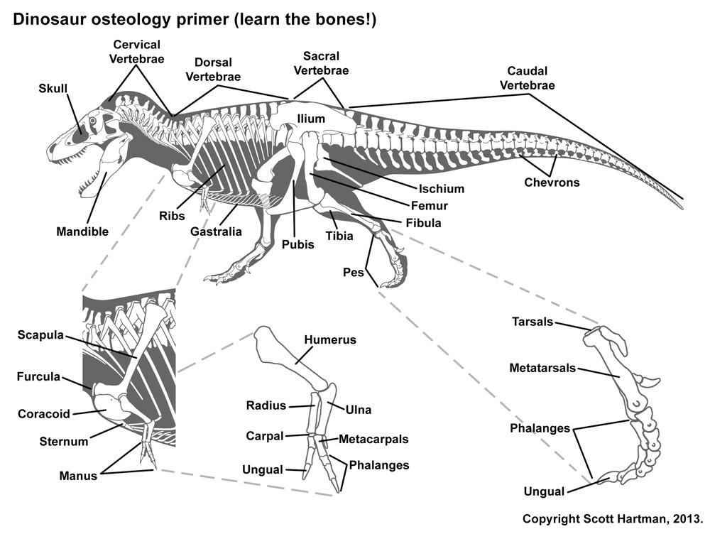 bone guide.jpg