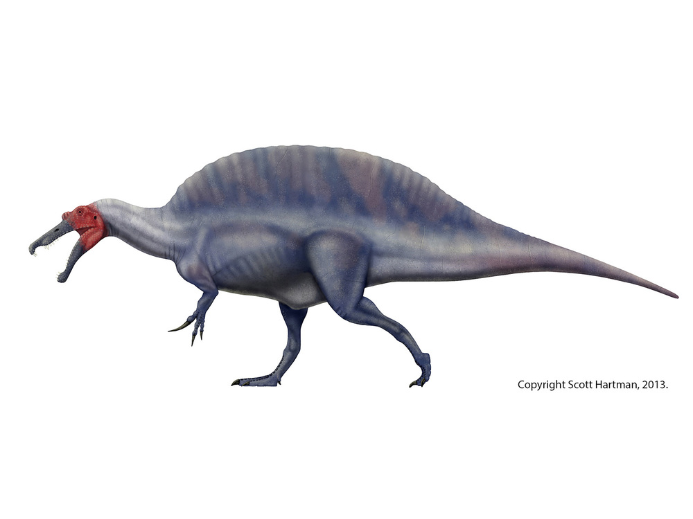 Spinosaurus, the true king fisher