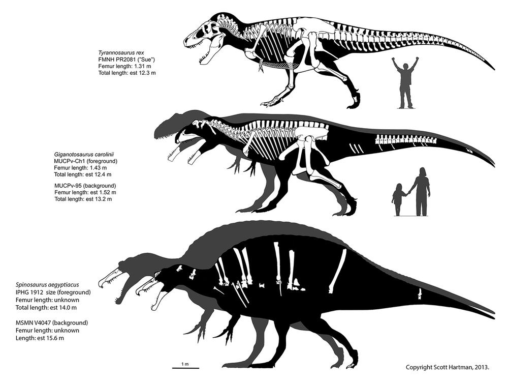 spinosaurus size comparison.jpg