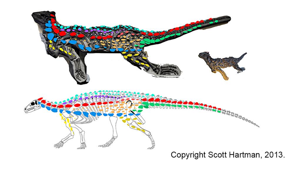 Desperate measures were taken when reconstructing the armor of Scelidosaurus.