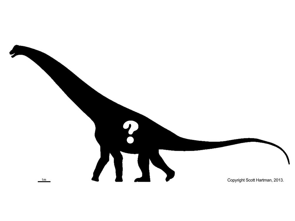 skeletal question.jpg