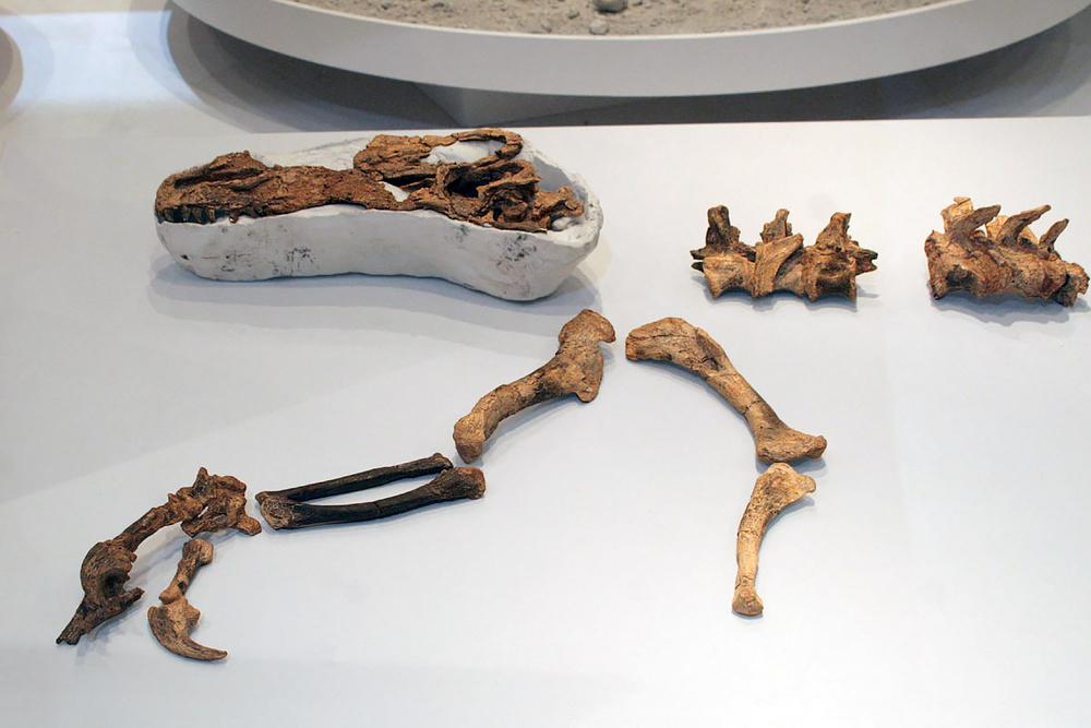 Guanlong wucaii specimen. Photo from academic.ru.