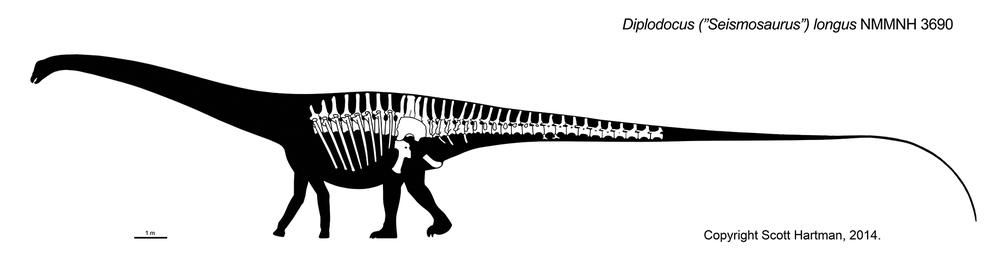 Smackdown: Supersaurus vs. Giraffatitan and ...