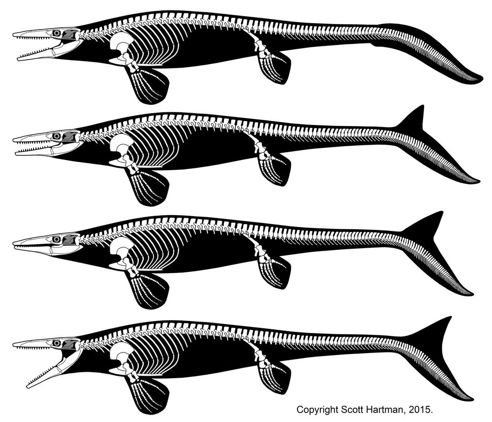 Tylosaurus-tail-controversy