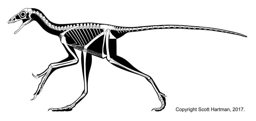 anchiornis skeletal - lori revision med rez.jpg