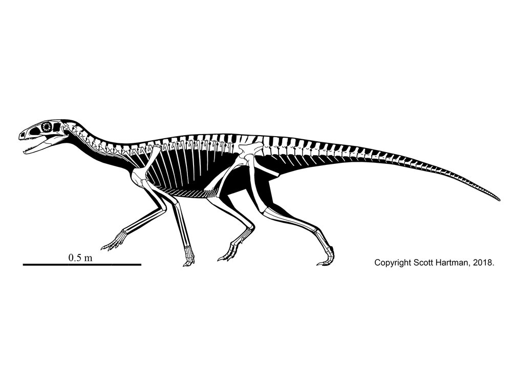 Image result for Silesaurus