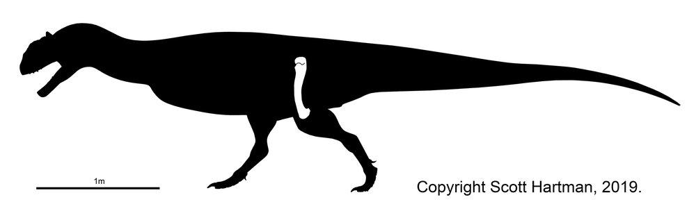 Majungasaurus femur web rez.jpg