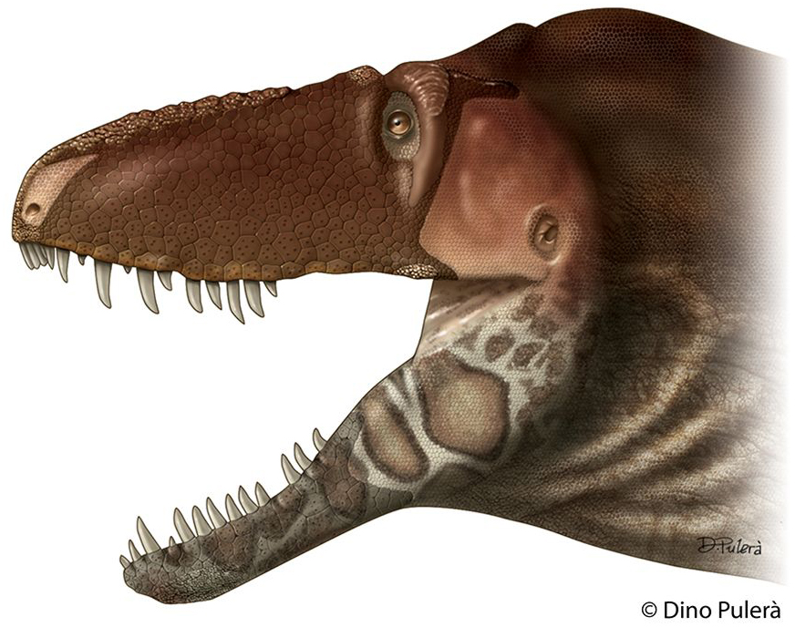 A lipless  Daspletosaurus horneri .