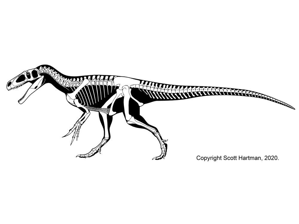 Marshosaurus bicentesimus