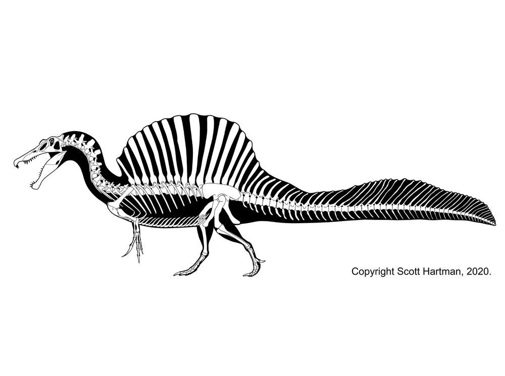 Spinosaurus.jpg