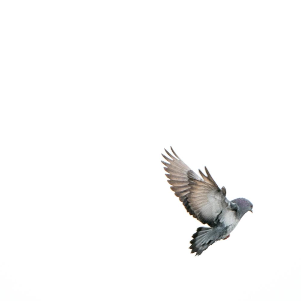 Bird III.jpg