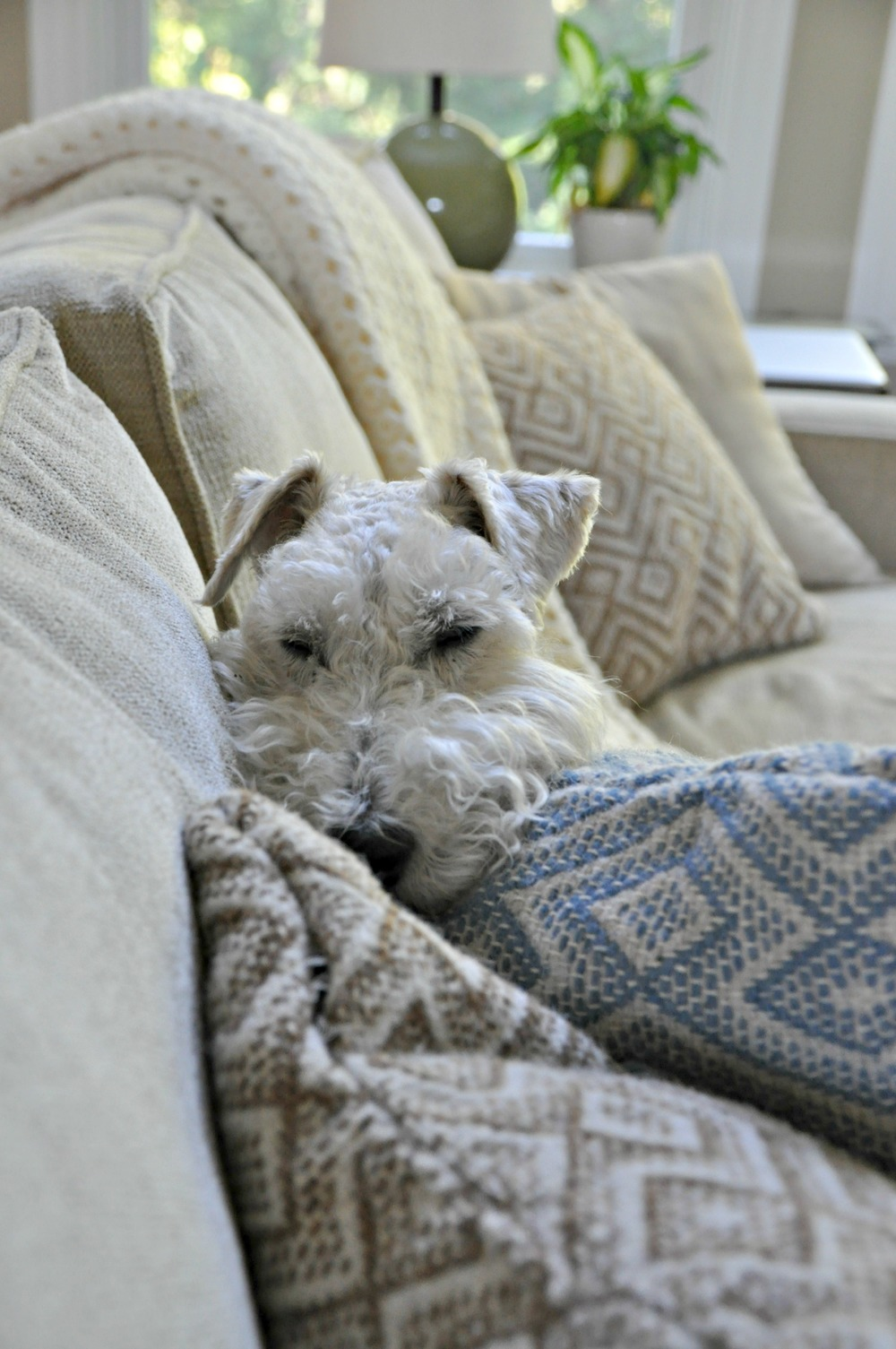 Sleepy Ike.jpg