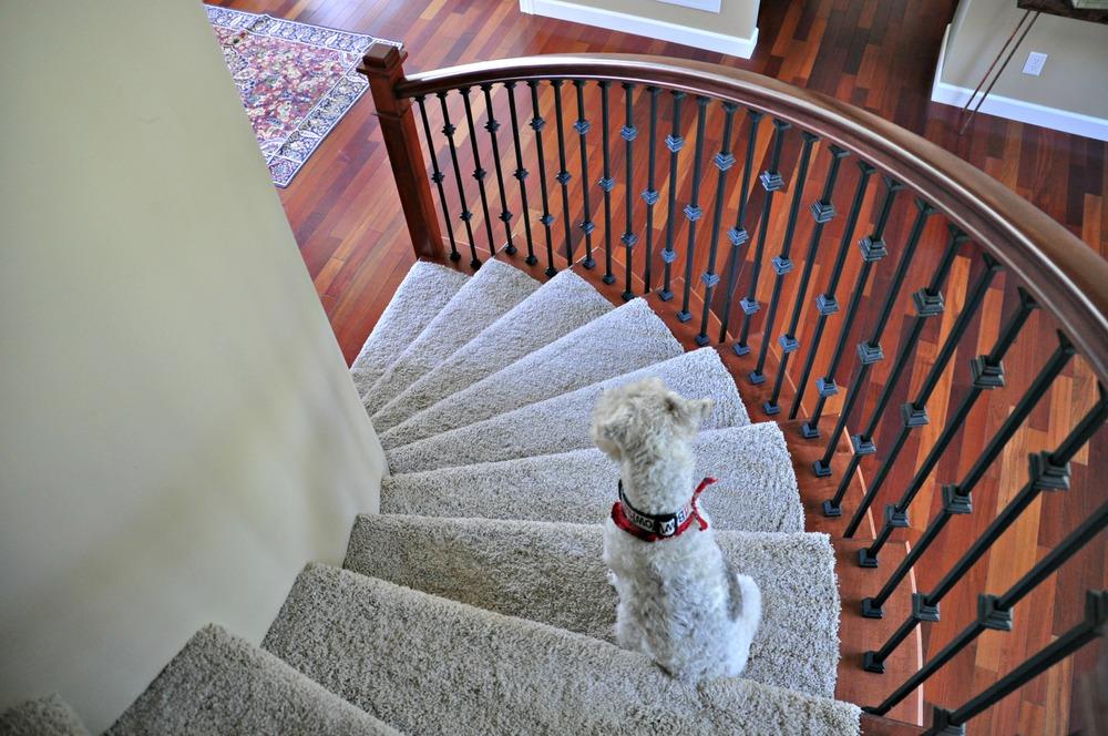 Ike on stairs.jpg