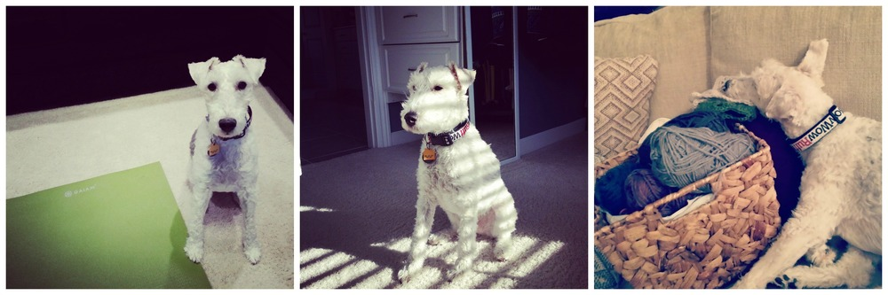 Ike  Decor and the Dog.jpg