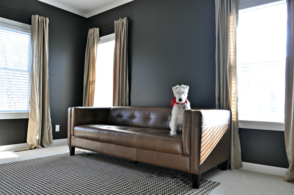 new office curtains and couch decor and the dog. Black Bedroom Furniture Sets. Home Design Ideas