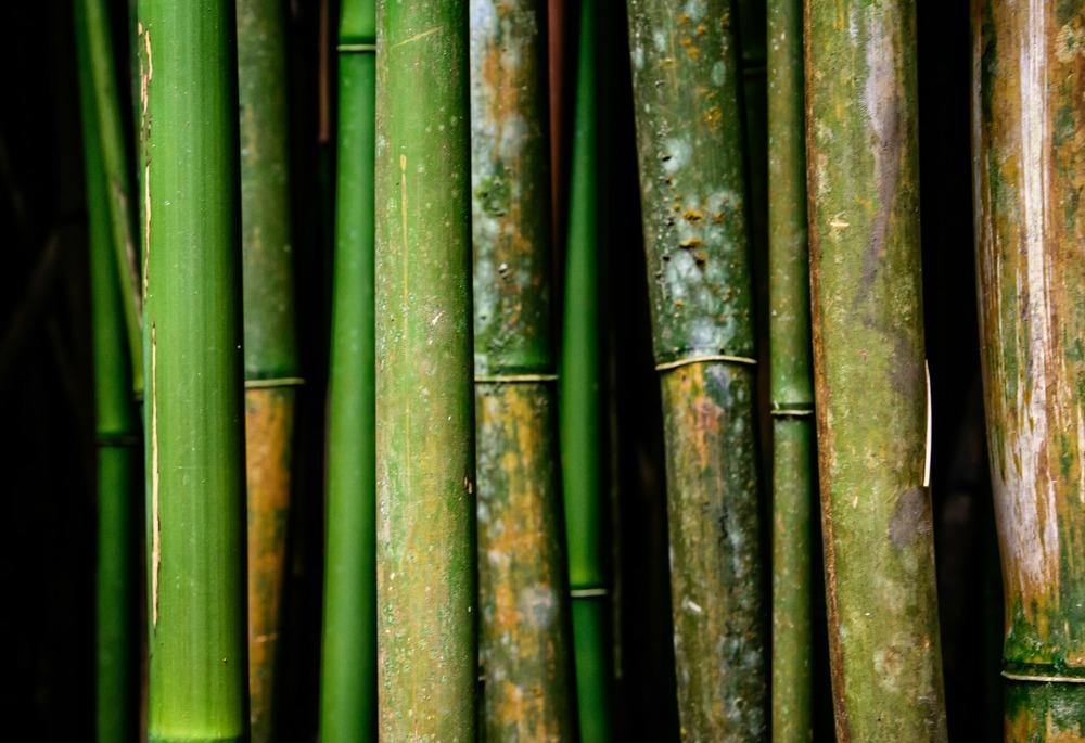 Road to Hana- Bamboo